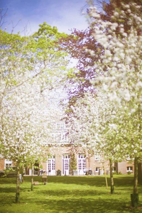 bloesem in de achtertuin